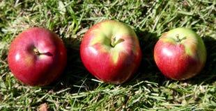 Яблоки выровнянные вверх Стоковое Фото