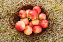 Яблоки в корзине стоковая фотография rf
