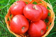 Яблоки в корзине Стоковые Изображения RF
