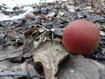 Яблоки в падении стоковые изображения