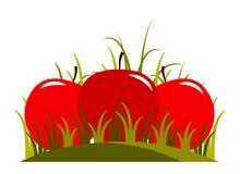 Яблоки в траве Стоковые Фотографии RF