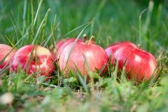 Яблоки в траве стоковые изображения rf