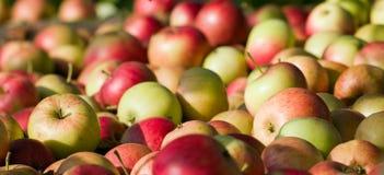 яблоки закрывают красный цвет вверх Стоковые Фотографии RF