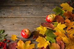 2 яблоки и листь осени на деревянной предпосылке Стоковое Фото
