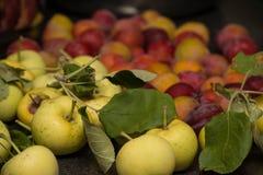 Яблоки и сливы одичалого краба для делать студень Стоковое Изображение RF