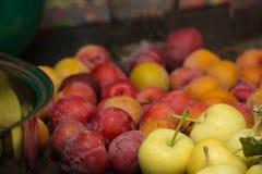 Яблоки и сливы одичалого краба для конца студня вверх по детали Стоковое Изображение RF