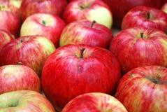 яблоки красные Стоковые Фото