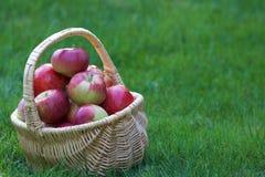 Яблоки падения стоковое фото rf