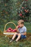 Яблоко деревьев зеленой травы мальчика плетеное белокурое красное меньший ребенк корзины выбора сада помощи стоковое изображение
