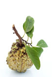 Яблоко заварного крема 1 Стоковые Изображения