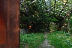 яблоко заволакивает вал солнца природы лужка ландшафта цветков Стоковые Фотографии RF