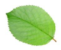 яблоко - зеленый вал листьев Стоковые Изображения
