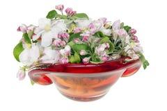 яблоко цветет стеклянный розовый вал весны Стоковая Фотография