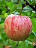 яблоко Стоковое фото RF