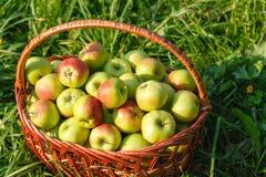 яблок корзины ткани ножа красный цвет затем до 2 Стоковые Фотографии RF