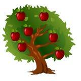 Яблоня с плодоовощами и листьями зеленого цвета иллюстрация вектора
