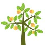 яблоня Стоковое фото RF