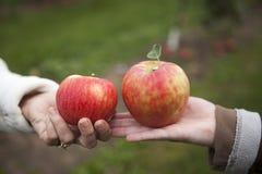 2 яблока в руках дам Стоковые Фото