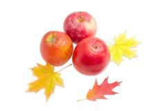 3 яблока и нескольких листьев осени на светлой предпосылке Стоковая Фотография RF