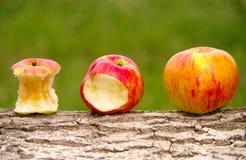 3 яблока стоковые фотографии rf