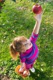 Яблоки выбранные маленькой девочкой стоковое изображение