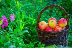 Яблоки в корзине стоковая фотография