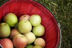 Яблоки в красной корзине Стоковое Фото