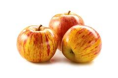 Яблоки дерева striped пинком на белизне Стоковая Фотография