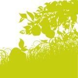 Яблоки и ветробои Стоковое фото RF