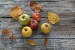 Яблоки и листья на предпосылке деревянных доск белизна осени изолированная принципиальной схемой Стоковые Изображения RF