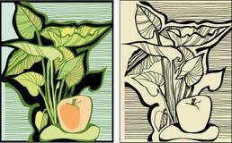 Яблоки и листья Стоковое Фото