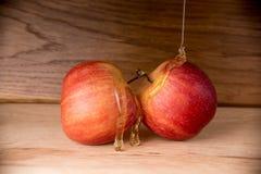 Яблоки и мед стоковое фото rf