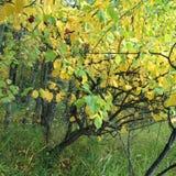 Яблоки и яблоки Стоковая Фотография RF