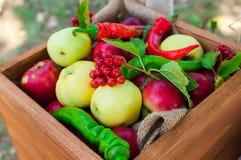 яблоки кладут деревянное в коробку Стоковые Фотографии RF