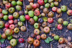 Яблоки падения стоковые фотографии rf