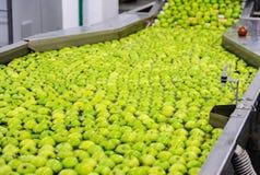 Яблоки сортируя и пакуя Стоковая Фотография