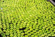 Яблоки сортируя и пакуя Стоковые Фотографии RF