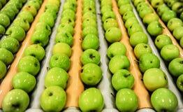 Яблоки сортируя и пакуя Стоковое фото RF