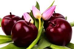 Яблоки с тюльпанами Стоковое Фото