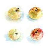 Яблоки #3 Стоковое Изображение