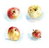 Яблоки #1 Стоковое Изображение