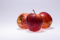 Яблоки Стоковое фото RF