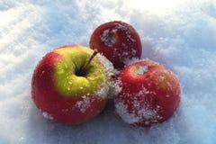 яблоки 3 Стоковое фото RF