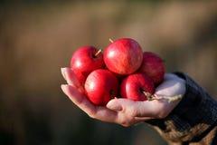 Яблоки og пригорошни Стоковые Изображения
