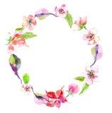 Яблоко акварели цветет венок бесплатная иллюстрация