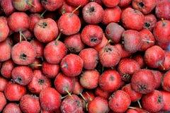 Яблоко боярышника Стоковое Фото
