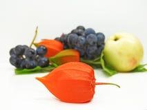 Яблоко, виноградины согласия черные и физалис цветут Стоковые Изображения
