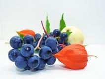 Яблоко, виноградины согласия черные и физалис цветут Стоковые Фотографии RF
