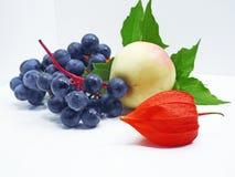 Яблоко, виноградины согласия черные и физалис цветут Стоковая Фотография