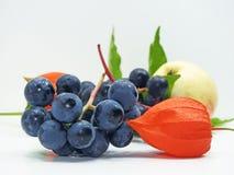 Яблоко, виноградины согласия черные и физалис цветут Стоковые Фото